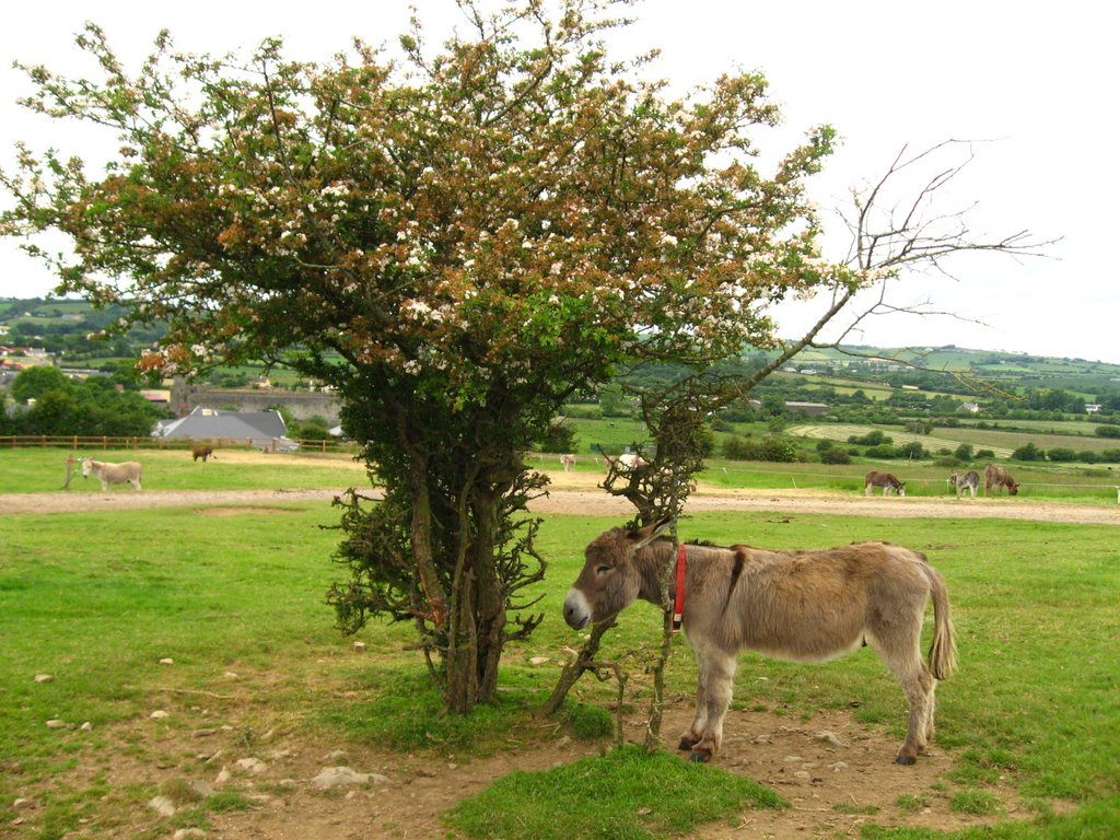 Liscarroll  - The Donkey Sanctuary
