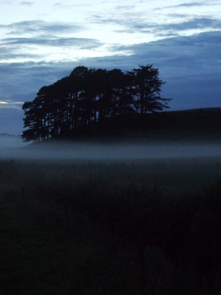 Copse in the mist