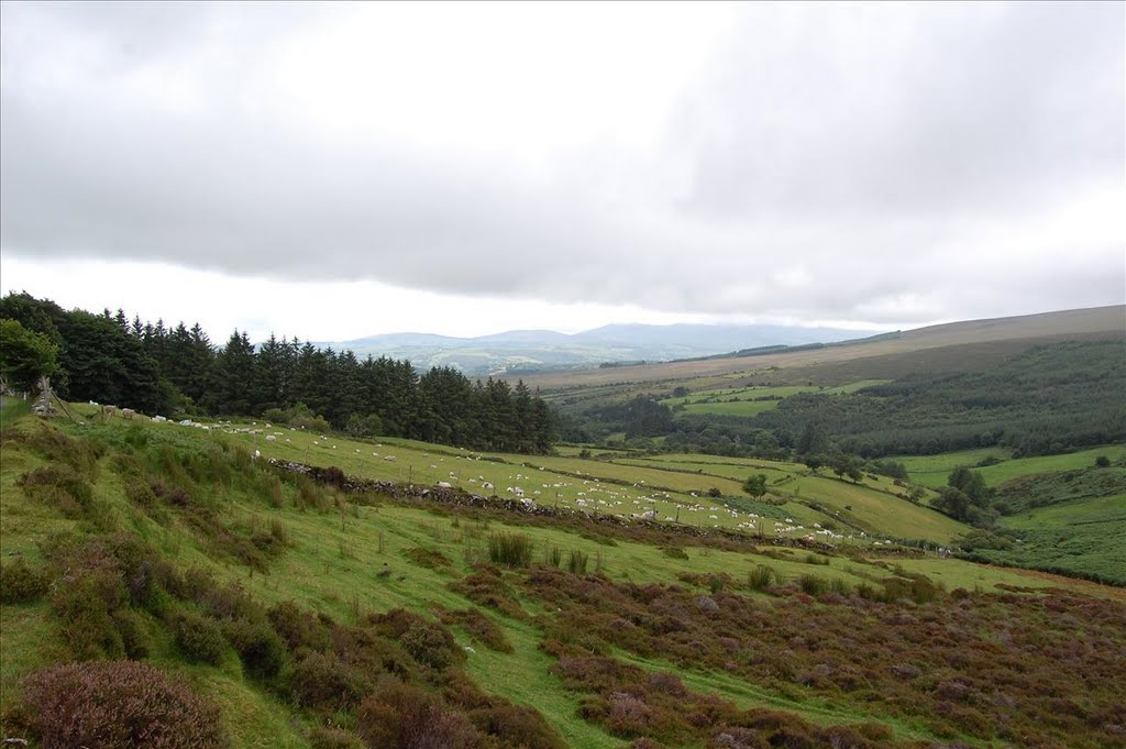 co Tipperary, Nier Valley - Comeragh Mountains