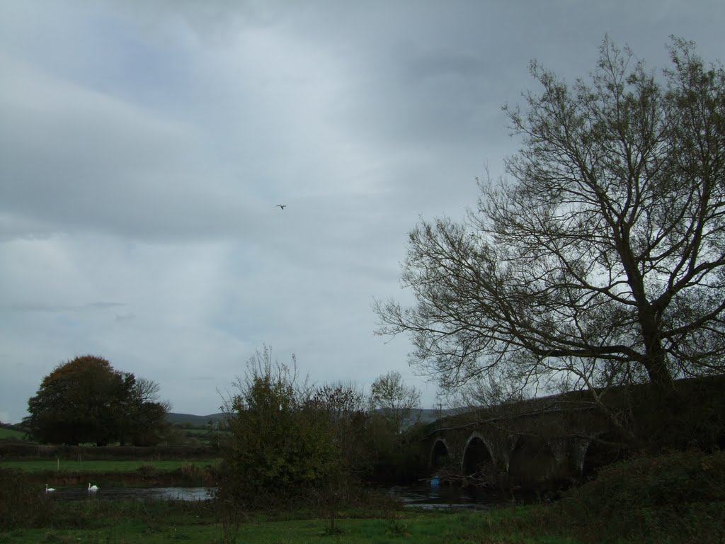 Flying Swan over Suir bridge