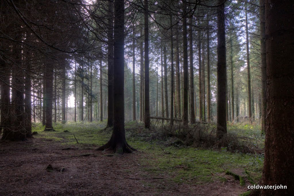 Dundrum Woods