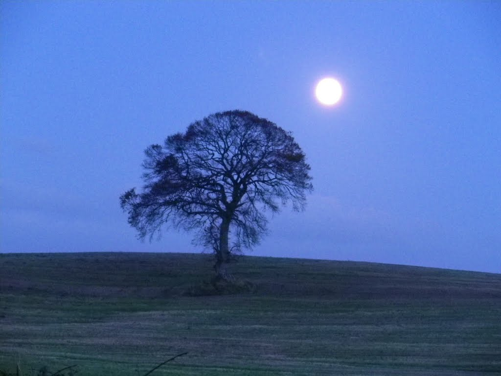 Full Moon near Tree