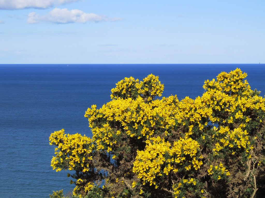Bray - Yellow flowers against the blue sea