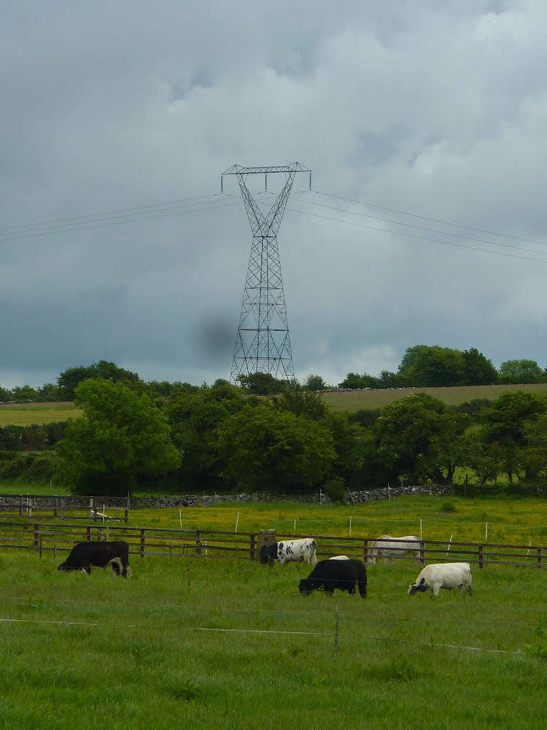 Pylons and Cattle