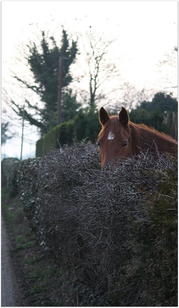 Horse in a hedge